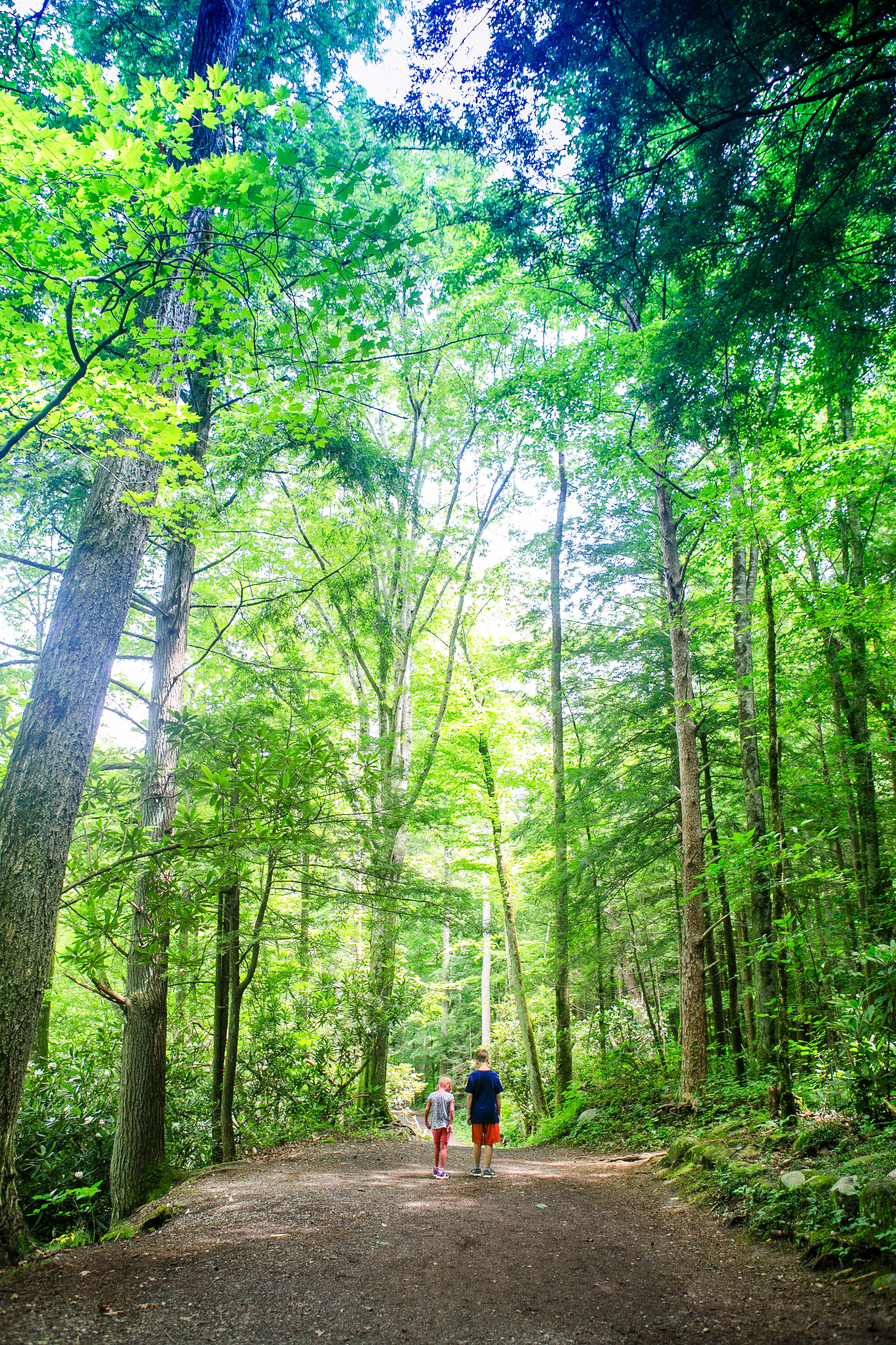 Hike in the Smoky Mountains with your kids
